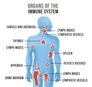 immune system is weak