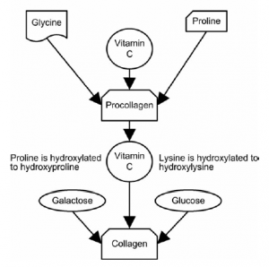 how collagen is made